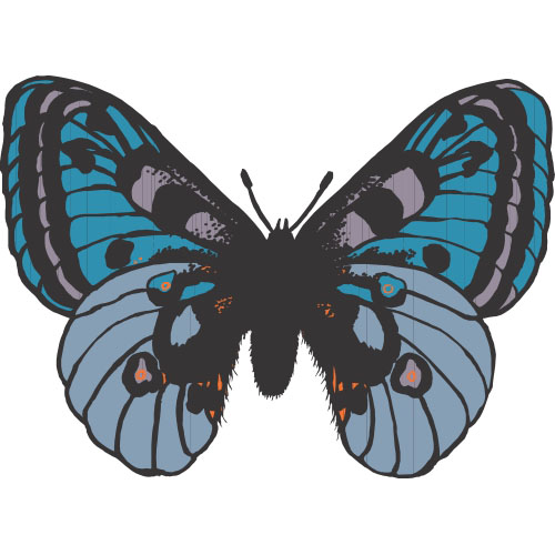 Butterfly DIY decals stickers version 15